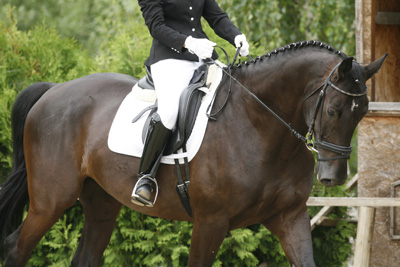 open dressage schooling events